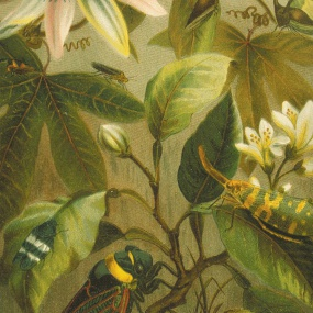 19th Century Natural History Print of Plants and Insects