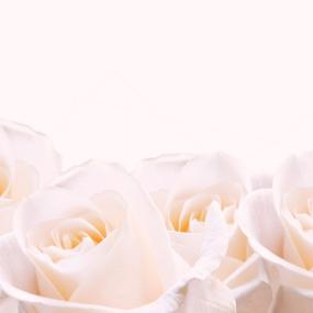 Rose_011