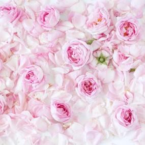 Rose_022