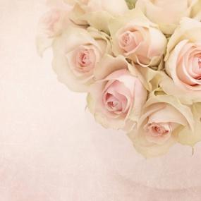 Rose_024