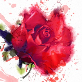 Rose_027