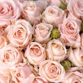 Rose_032