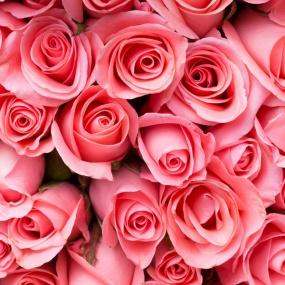 rose_033